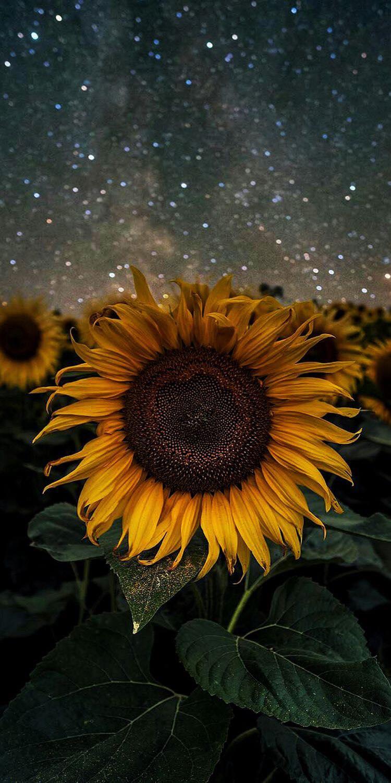 Hình ảnh Hoa đẹp (10)