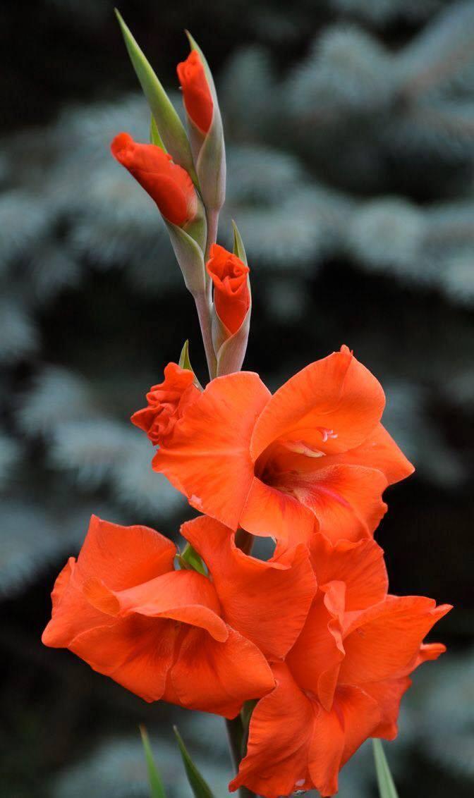 Hình ảnh Hoa đẹp (12)