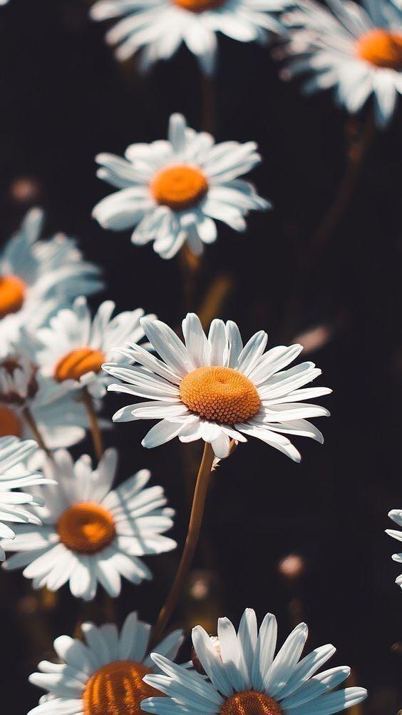 Hình ảnh Hoa đẹp (9)