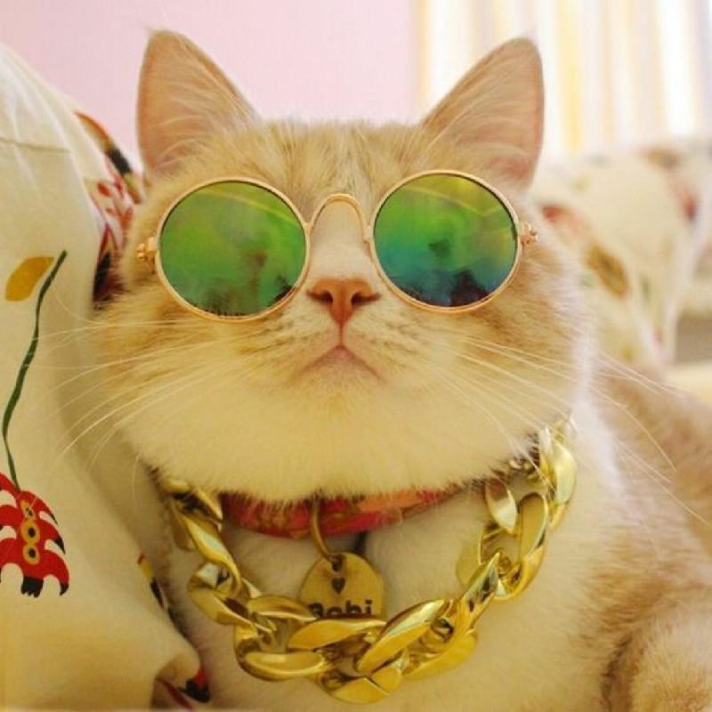 ảnh Mèo Cute Dễ Thương (31)